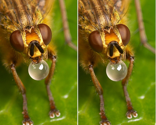 9 Crazy Cross Eye 3D Photography Images and How to Make Them   (3/3)