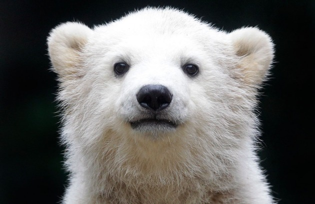APTOPIX Germany Polar Bear Cub
