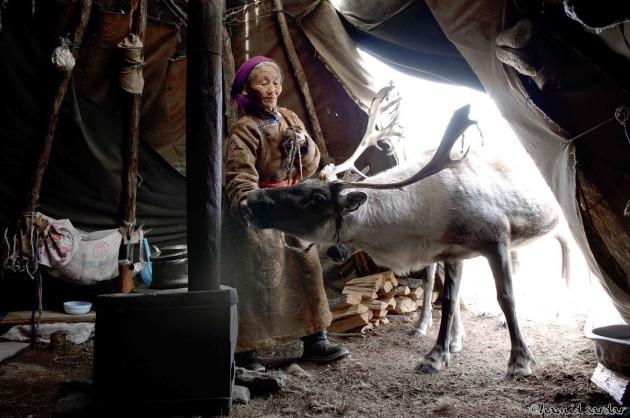 Totem-Deer-2-West-Taiga-Hovsgol-2006