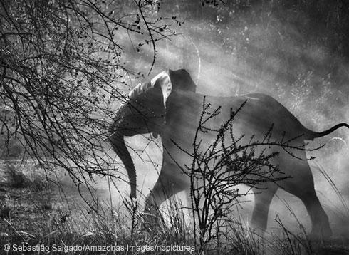 elephant-banner_118526_2