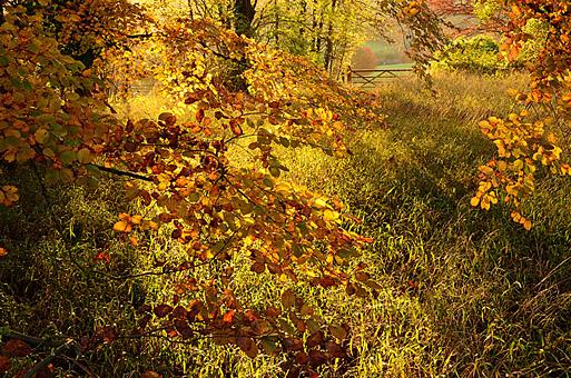 Autumn Colour at Polesden Lacey, Surrey, England