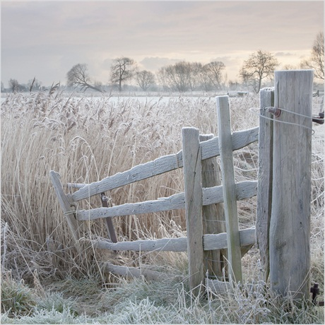 Linda Wevill, 'Frosty Gate', Romney Marsh, Kent - Your View