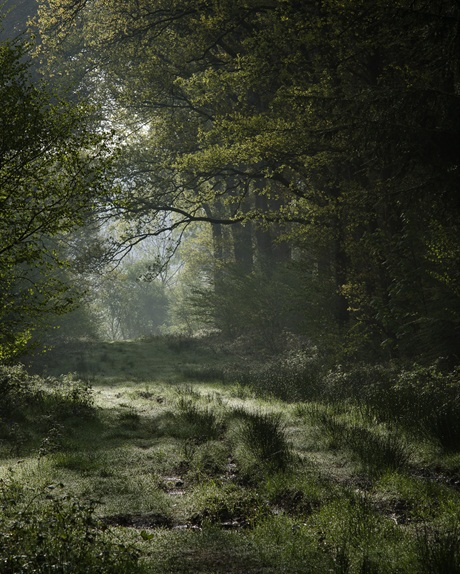 Paul Mitchell, 'Micheldever Woods', Hampshire. STM Choice & Highly Commended - Classic View