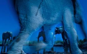 Wildlife Photographer of the Year 2013 Grand title winner Winner 2013 Animal Portraits Greg du Toit, South Africa