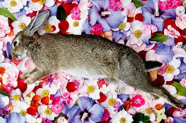 honoring-dead-animals-natura-morte-marina-ionowa-gribina-1