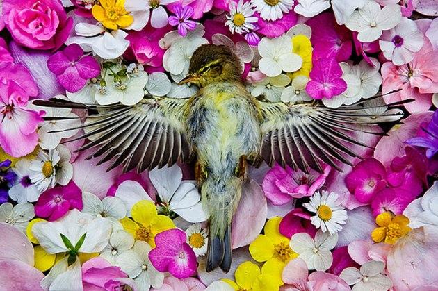 honoring-dead-animals-natura-morte-marina-ionowa-gribina-2