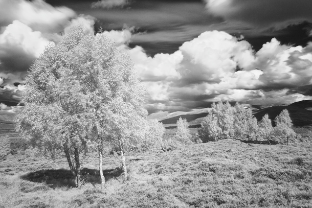 Digital_infrared_photography_tips_DCM155.shoot_core.MHA_146839sharpen