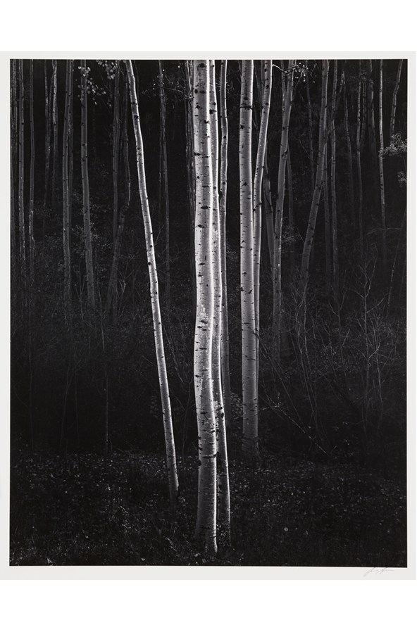 Aspen-New-Mexico-1958-Ansel-Adams-The-RPS-Collection-copyright-National-Media-Museum-Bradford_592x888