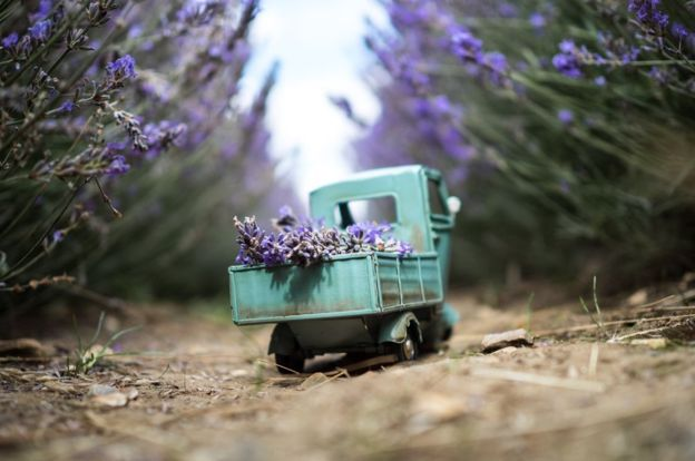 _85466575_lavenderdelivery-hitchin