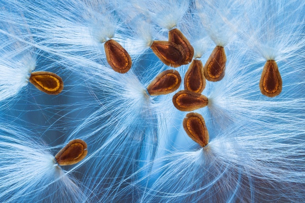 Christine Blanchin dos Santos snapped this collection of seed pods Photograph: Christine Blanchin dos Santos/IGPOTY