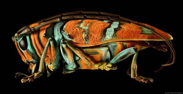 Levon Biss Microsculpture